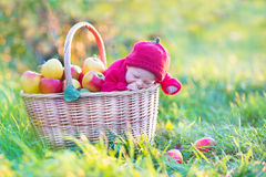 Tiny newborn baby in big basket with apples in a sunny autumn ga Royalty Free Stock Image