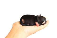Tiny Newborn On Human Hand Royalty Free Stock Photos