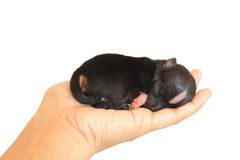 Tiny Newborn On Human Hand Stock Photography
