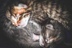 Tiny newborn kittens Stock Photography