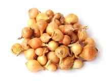 Tiny onion Stock Image