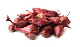 Tiny onion roots Stock Image