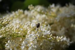 Tiny Petals and Insects 2019. Highland Productions LLC Darren Dwayne Frazier     These tiny white petals look weird from a distance it looks like a mess in the royalty free stock photo