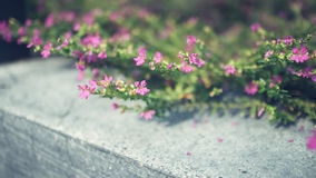 Tiny pink plant. Royalty Free Stock Photos
