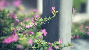 Tiny pink plant. Royalty Free Stock Photography