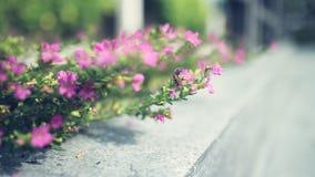 Tiny pink plant. Stock Image