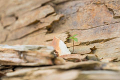 A tiny plant growing in boldly in rocky crags. Tiny plant growing in the rocks alongside a cliff Stock Photography