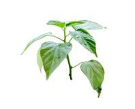 Tiny plant growing Stock Photo