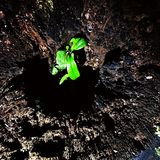 Tiny plant grown inside of a tree trunk stock photography
