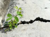 Tiny plant grows in the cement cracked. Life and adaption concept. Picture with copy space royalty free stock image