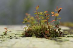 Tiny Plant Growth. Close-up of a small patch of plant growth on the side of a tree Stock Photography
