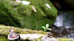 Tiny plant and moss at waterfall stock video footage