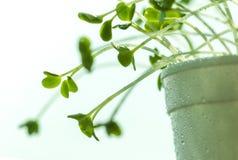 Tiny plant Stock Photography
