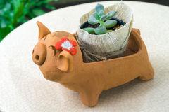 Tiny plant in pig pot Royalty Free Stock Images