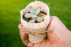 Tiny plant pot Royalty Free Stock Images