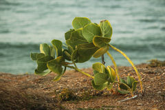 Tiny plant by the sea. Stock Image