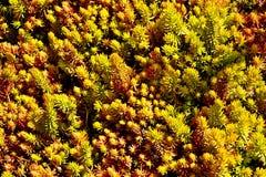 Tiny Plants Royalty Free Stock Photo