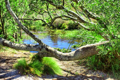 Tiny pond in indigenous forest Royalty Free Stock Photos