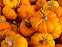 Tiny Pumpkins. Small pumpkins for sale at a local fruit stand royalty free stock photo