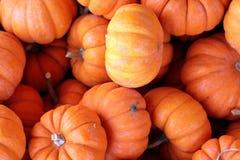 Tiny Pumpkins Stock Image