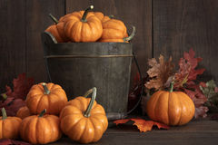 Tiny pumpkins in wooden bucket Stock Photos