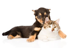 Tiny puppy dog embracing a cat. isolated on white background Royalty Free Stock Image