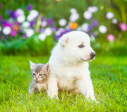Tiny puppy sitting with kitten on green grass.  Royalty Free Stock Photos