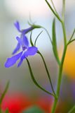 Tiny Purple Flower Stock Photo