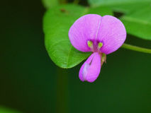 Tiny Purple Flower Stock Image
