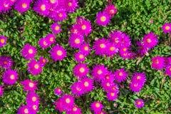 Tiny Purple Flowers Backdrop Royalty Free Stock Photography