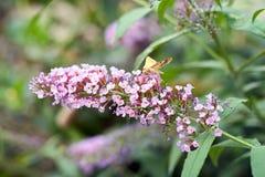 Tiny purple flowers Stock Images