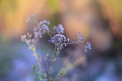 Tiny purple flowers soft bokeh backdrop stock photos