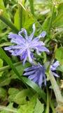 Tiny Purple royalty free stock photo