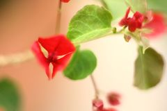 Red and green Stock Photography