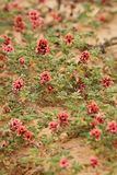Tiny Red flowers on brown background stock images