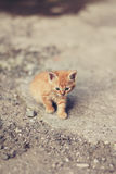 Tiny red kitten with blue eyes outdoors portrait.  Stock Image