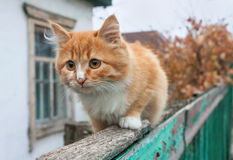 Tiny red kitten Stock Photos
