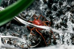 Something arthropod and invertebrate. Tiny red spider or tick on the background of a rough stone texture stock photo