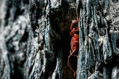 Something arthropod and invertebrate. Tiny red spider or tick on the background of a rough stone texture stock images