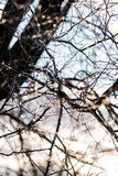 Tiny reflections of sunlight on branches of tree in morning after ice storm Stock Photos