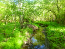 Tiny River. Drakes River in late spring Royalty Free Stock Photography