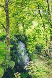 Tiny river in the Irish countryside surrounded by trees and vegetation. A t4iny river in the Irish countryside surrounded by trees and vegetation royalty free stock photo