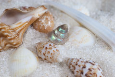 Tiny sea shells in white sand Stock Images