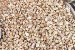 Tiny seashell Royalty Free Stock Photography
