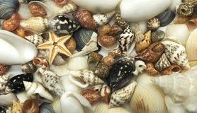 Tiny seashell starfish shell summer season closeup travel vacation relax beach. Concept Stock Images