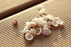Tiny Seashells Royalty Free Stock Image