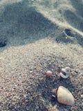 Tiny shells on the shore stock photos