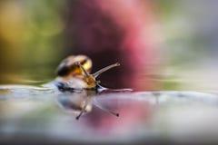 Tiny snail Stock Photography