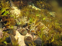Tiny Snails Stock Photos