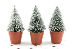 Tiny snow-flecked trees Stock Photo